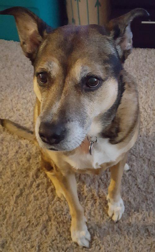 Sam - Pet Ambassador